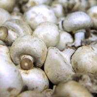 The time has come To Consider Growing Mushrooms